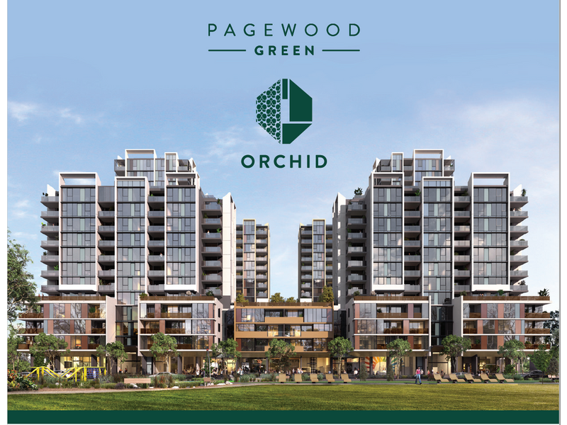 Pagewood Orchid